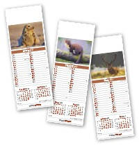 Slimline British Wildlife Calendar